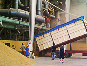 Receiving Paddy rice